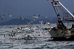 """lo spettacolo dell'assalto dei gabbiani ai pescherecci all'Argentario - the spectacular """"assault"""" of the seagulls to the fishing boats in #Argentario sea"""