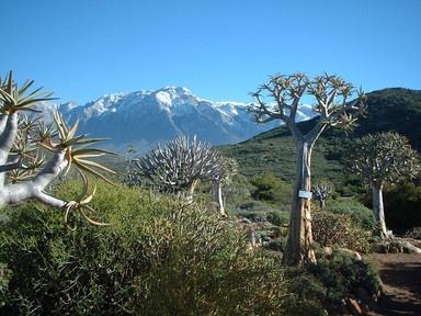 Karoo National Botanic Garden with Koker-trees.