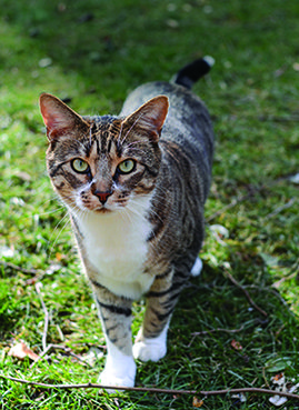 how to deter cats from using flower beds as litter boxes garden things cat flowers cat. Black Bedroom Furniture Sets. Home Design Ideas