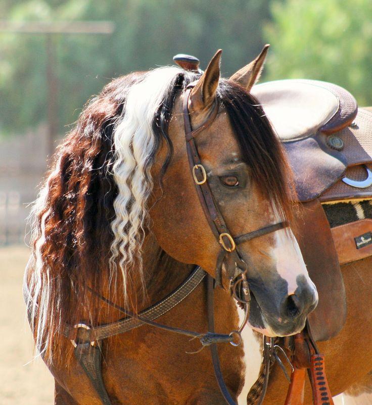 1000+ images about Horses on Pinterest   Quarter Horses ...