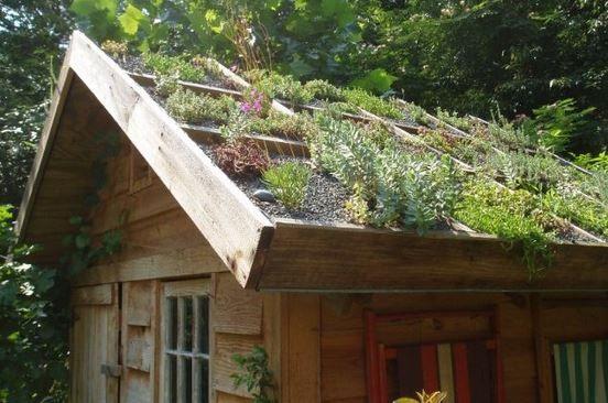 Střešní zahrada - zelená střecha nejen pro dřevostavby, zahradní domek kůlna…