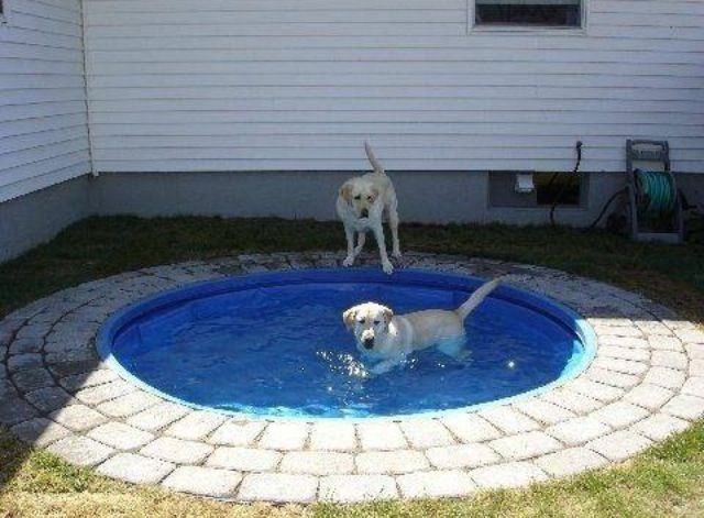 Dig a hole...add some pavers or bricks insert pool. Instant dog pool!