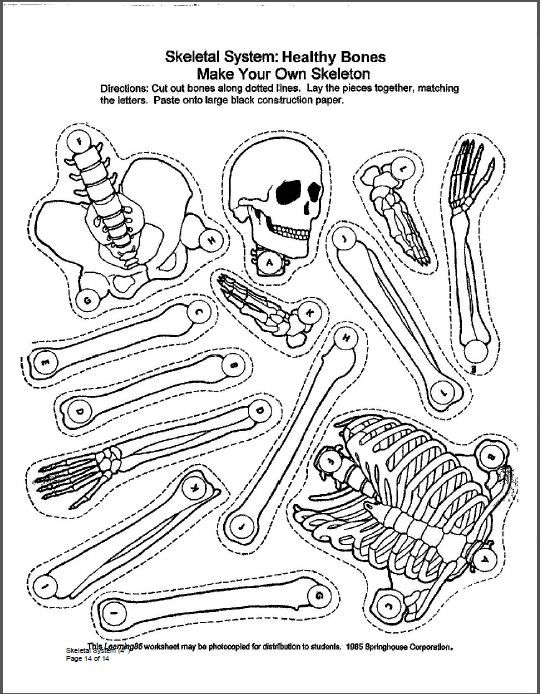 Worksheets Human Skeleton Worksheet Grade4 1000 ideas about skeletal system activities on pinterest human body unit systems and crafts