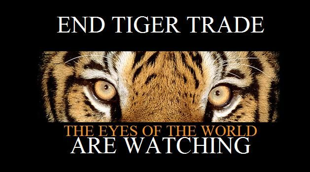 The Eyes of the World Are Watching!