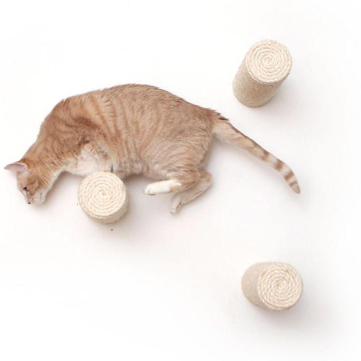 Pin On Cat Lady Stuff