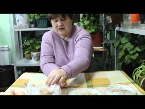 Чем кормить кур зимой, чтобы они несли яйца — Яндекс.Видео