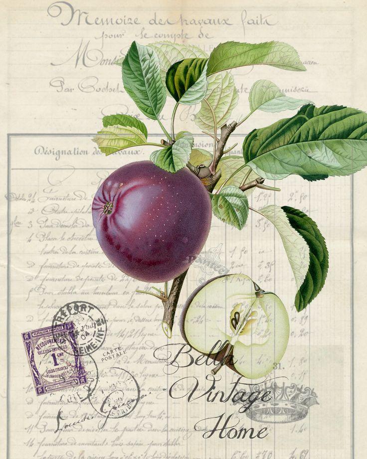 Botanical Purple Apple Print, Pillow, Note Cards, Tea Towel