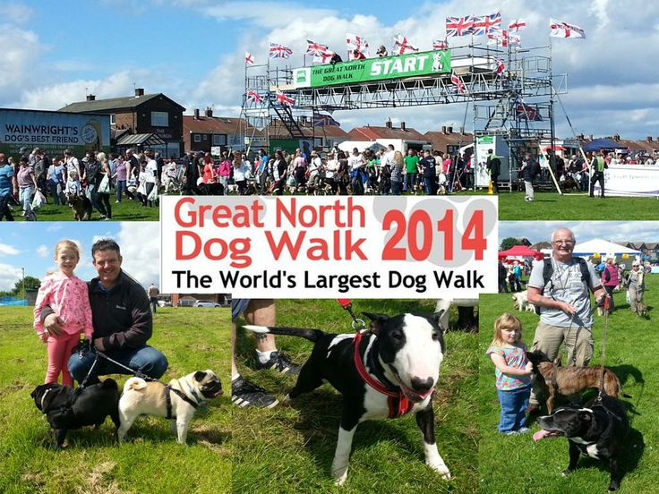 The Great North Dog Walk 2014 at South Shields, South Tyneside.