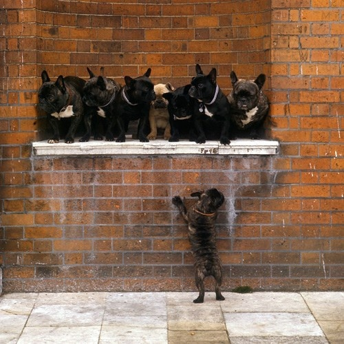 Art frenchie! puppy-fever