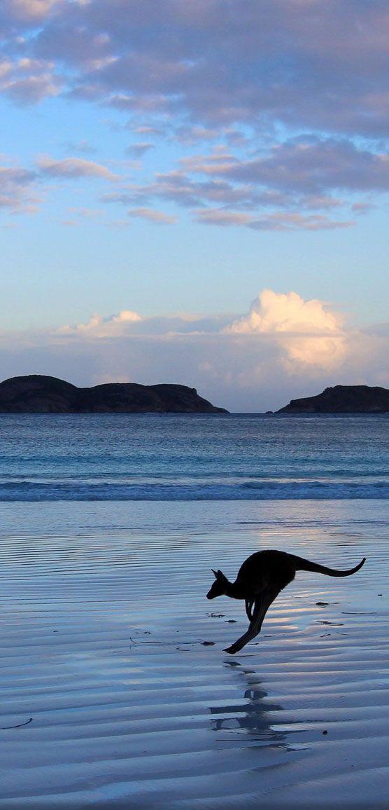 Canguro Australiano.