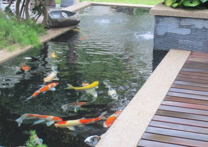 56 best images about koi ponds on pinterest ponds for Koi pool construction