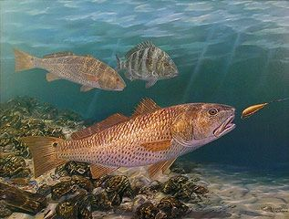 13 best images about redfish wall art on pinterest fish for Red saltwater fish