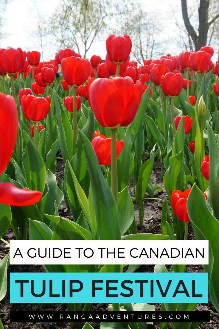 Canadian Tulip Festival Guide | Ranga Adventures