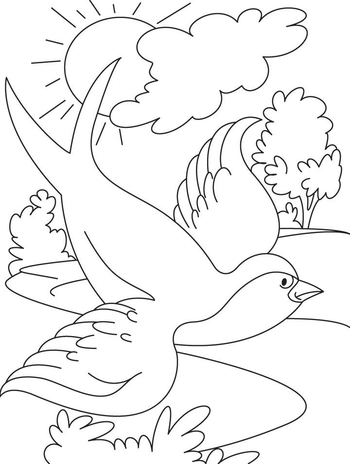 109 Swallow Bird Flying Coloring Pages Enjoy Coloring Places To