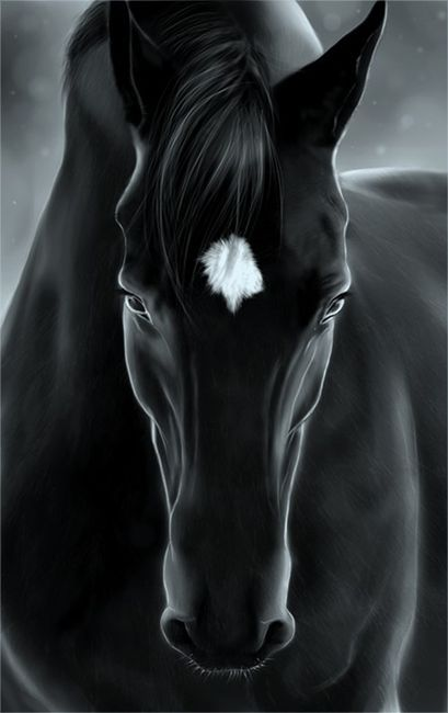 Black & White Horse..Perfect