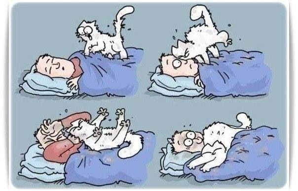 The Simon's Cat version of Gizmo's get me out of bed!