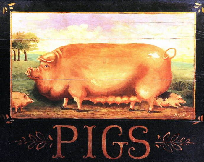 Pigs (Mid Gordon)
