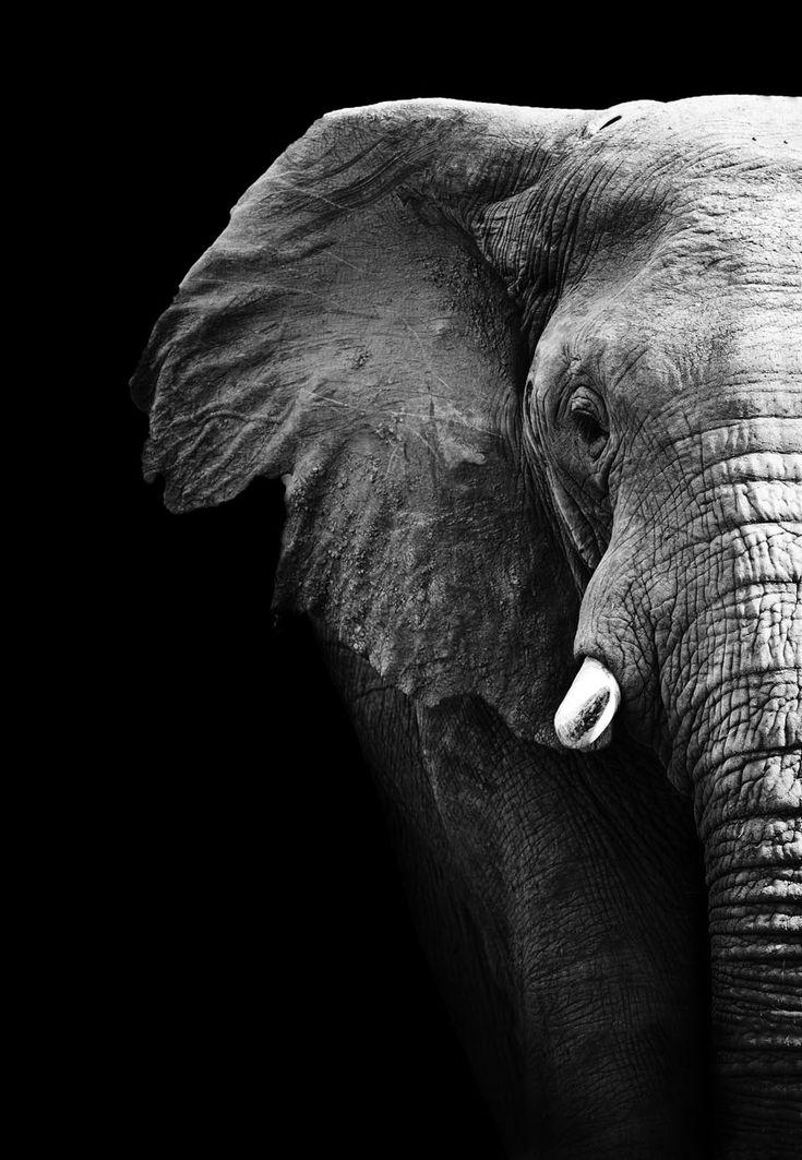 Richard Leakey's anti-poaching legacy will soon be on the big screen