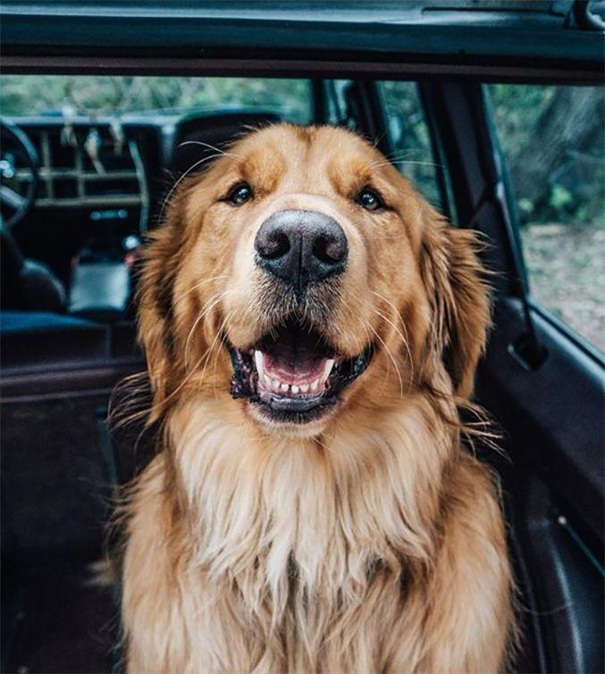 Best Way To Euthanize A Dog