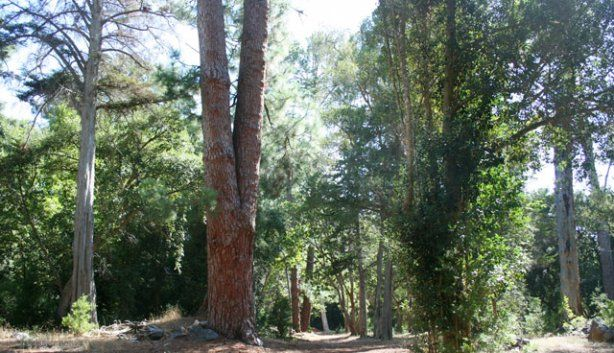 Hiking Route+Bike: Tokai Arboretum. Circular: 30min. Elephants Eye path.