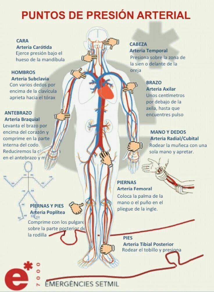 49 mejores imágenes de Anatomía en Pinterest | Acupuntura, Anatomía ...