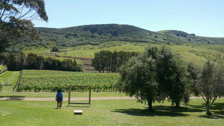 nz winery waiheke