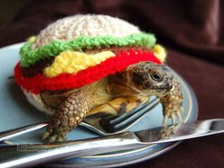 If I ever get a turtle...
