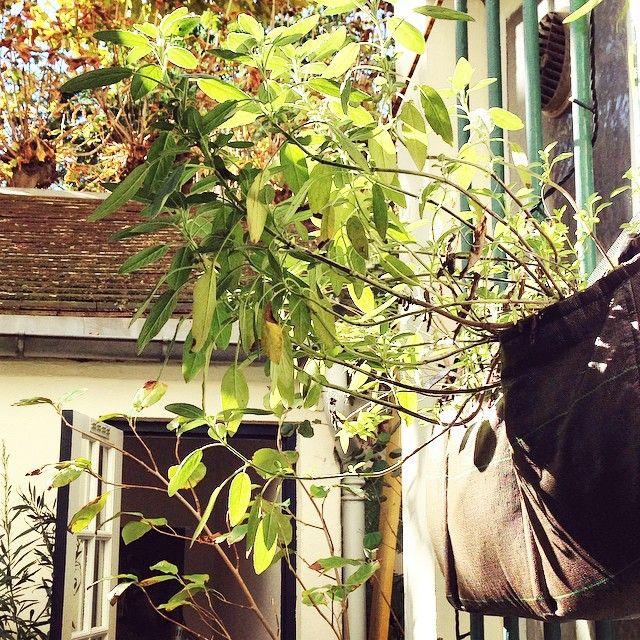 17 meilleures id es propos de jardini res aux fen tres for Mettre des barreaux aux fenetres