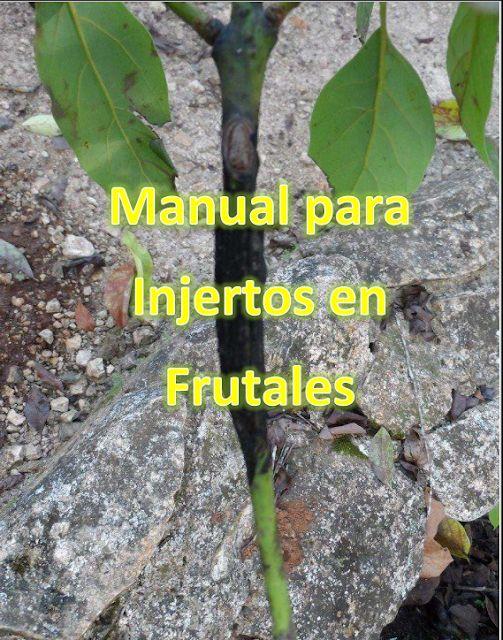 Libros de agronomia gratis en pdf manual para injertos en - Libros sobre jardineria ...