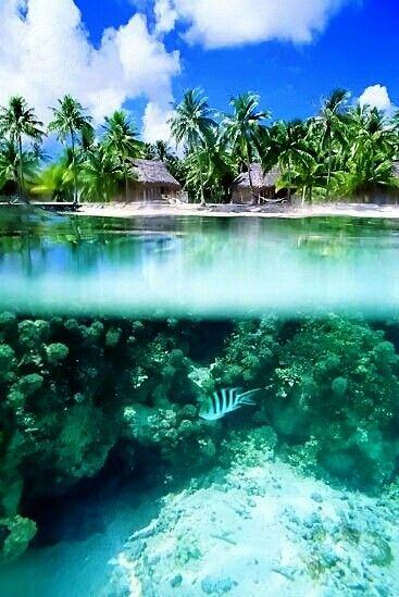 The essence of a tropical paradise. #PANDORAloves
