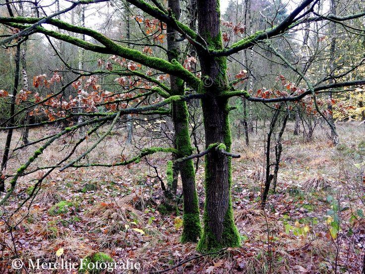 Lijnenspel van takken met mos. Ik vond het een kunstwerkje van de natuur. De bomen bekleed met mos, helder groen in het verder nog kale dorre bos