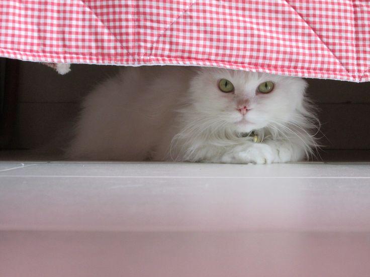 Hiding me! #Feles #TheWhiteCat