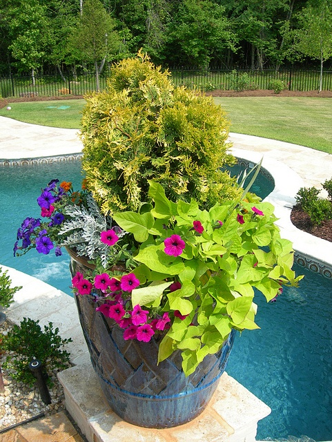 17 Best Images About Sweet Potato Vine On Pinterest
