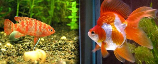 Las 25 mejores ideas sobre peces para pecera en pinterest for Vivero para peces