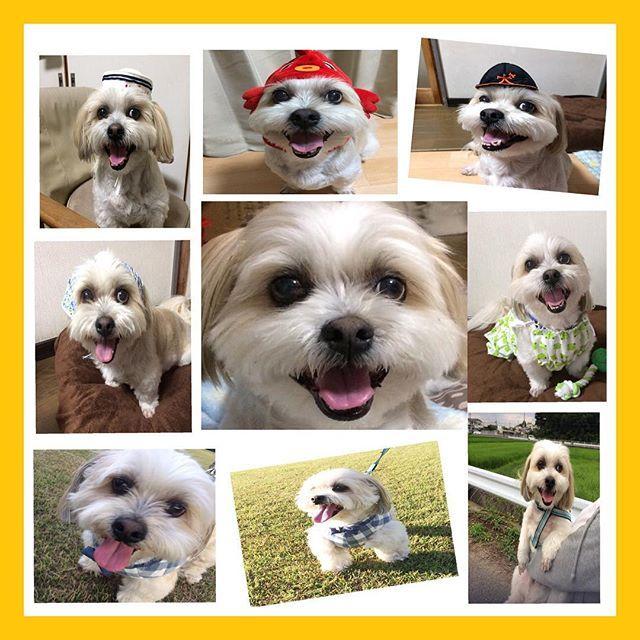 こんにちは😃 ・ ・ バトンです❣️ ・ まろんちゃん🐶ももちゃん🐱 ぷりんちゃん🐶の優しいママ (@monamona_fam )さんから #笑ういぬ バトン 受け取りました😊 モナさんありがとう❤️ ・ ミッキーの笑顔✨ 私の元気の源です😆 ・ ・ タグ付けしたので よかったらお願いします💕 スルーもOK🙆 ・ ・ #犬#愛犬#シーズー#マルチーズ#ミックス犬#わんこ#いぬバカ部#shitzu#maltese#shitzusofInstagram#malteseofInstagram#mydogiscutest#ilovemydog#dogsofInstagram#doglover#doglife#instadog#instagood#love#lovedogs#cutedog#follow#pawsforjolie#❤️迷子犬の掲示板応援団#病気のお友達に元気玉