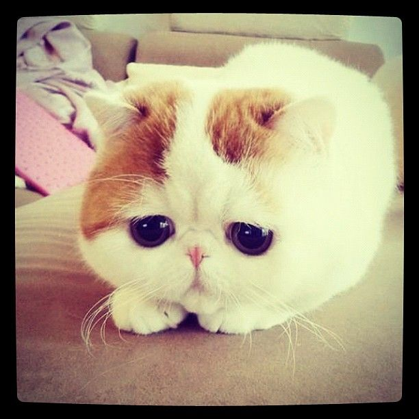 ok, thats cute.