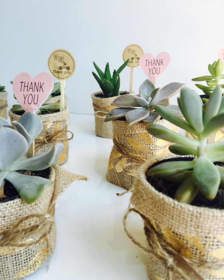 Unique Wedding Gifts Brisbane : ... wedding #weddingfavors #weddingfavours #weddingsucculents #brisbane #