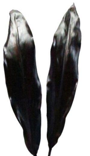 CORDYLINE BLACK KNIGHT LEAF XL