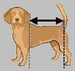 Så här ritar du mönstret för ett täcke med exakt rätt passform för just din hund