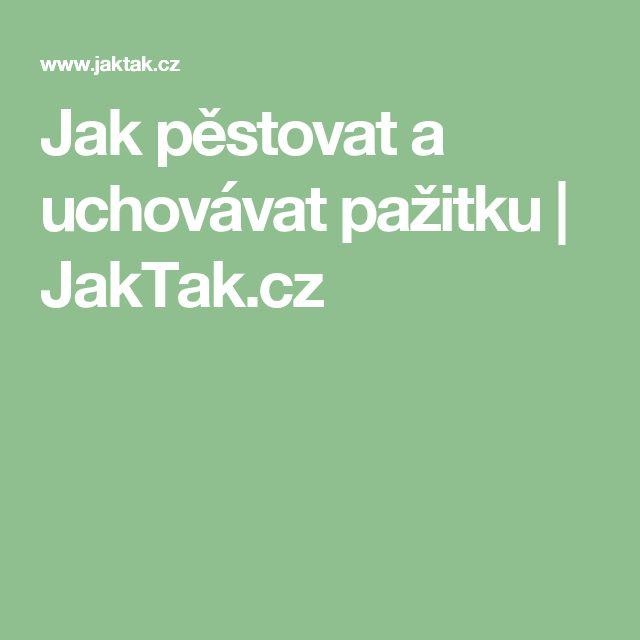 Jak pěstovat a uchovávat pažitku | JakTak.cz