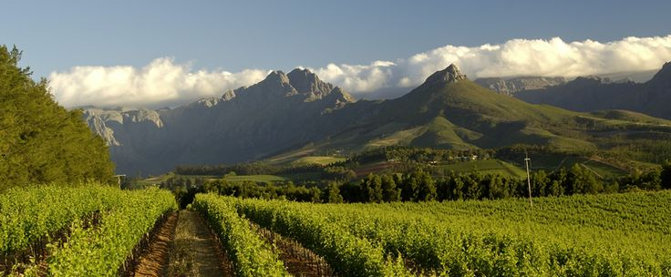 Knorhoek Wine Estate Stellenbosch :: Farm  Wine Gallery :: Fine Wines | Weddings | Accommodation | Towerbosch Restaurant
