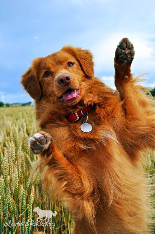 Cool Dog Rescue Nova Scotia