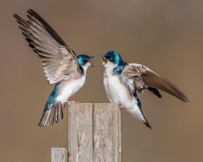 Царство птиц: 19 фотографий, признанным лучшими на конкурсе Audubon Photography Awards 2017
