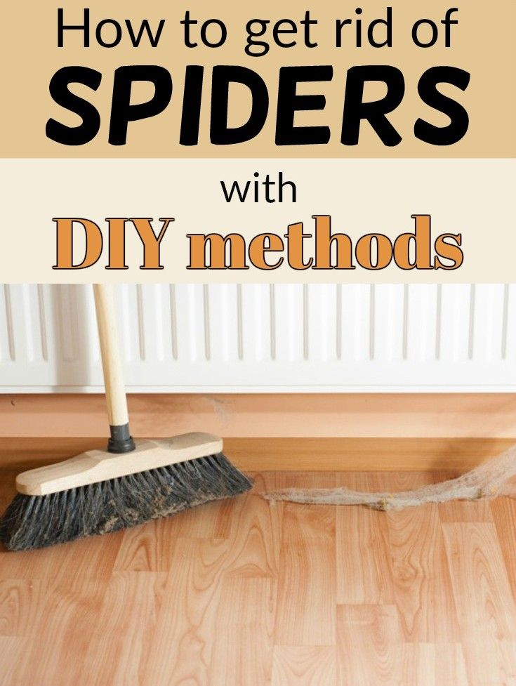 50 best diy insects images on pinterest home remedies for How to get rid of spiders in house