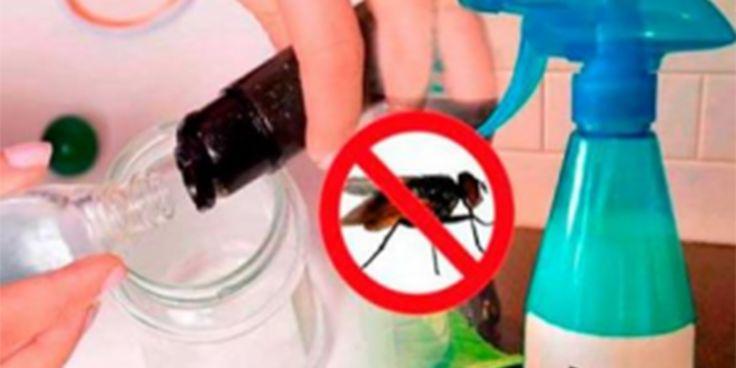 Mi casa está libre de mosca desde hace 5 años cuando conocí este truco casero de 2 ingredientes