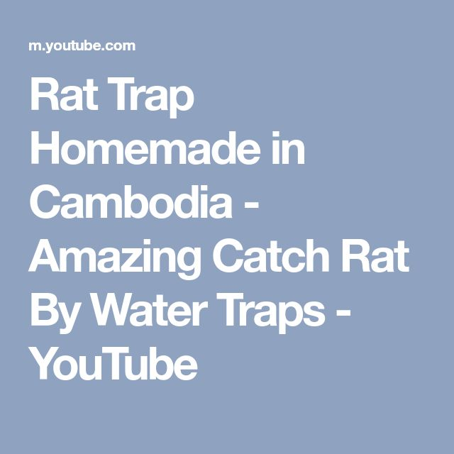 Rat Trap Homemade in Cambodia - Amazing Catch Rat By Water Traps - YouTube