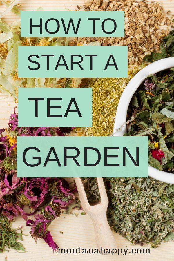 So bauen Sie Ihren eigenen Teegarten an