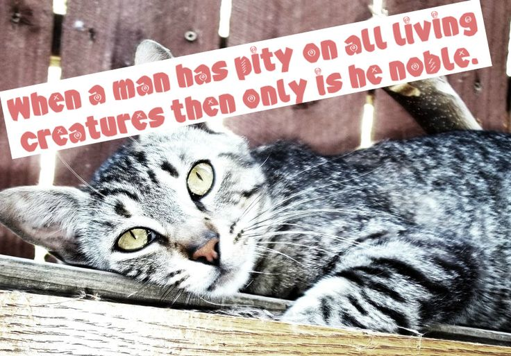 Stop Animal Cruelty Quotes | STOP ANIMAL ABUSE by ~Malficient on deviantART