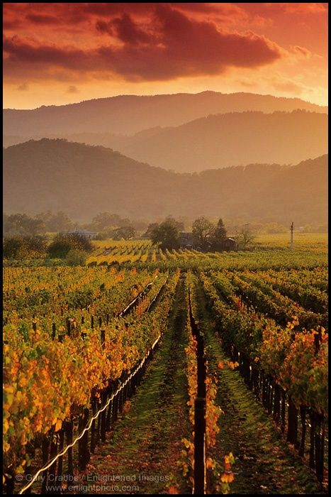 13 Best Wine Country Landscape Paintings Images On
