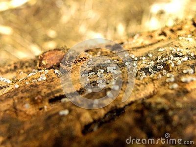 A close-up view of ant larvae.
